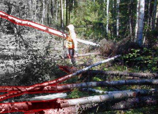 Thumbnail for the post titled: Remote Sensing Boreal Coarse Woody Debris: Thesis Wrap-up